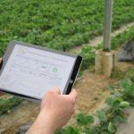 Smart Farming im Gewächshaus des Obsthof Eisenmann - Der Zugriff auf die Messwerte ist weltweit von allen Endgeräten möglich